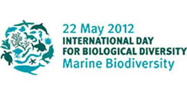 idb-2012-logo-en.jpg