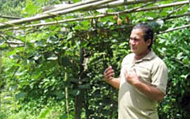 Mr Tej Bhadur Gurung has replaced plots normally reserved for maize with less time-consuming, high-value kiwi