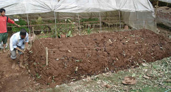 effects of cowdung and poultry manure Koura et al j appl biosci effect of composting of palm oil mill wastes and cow dung or poultry manure on amaranthus hybridus growth and yield.