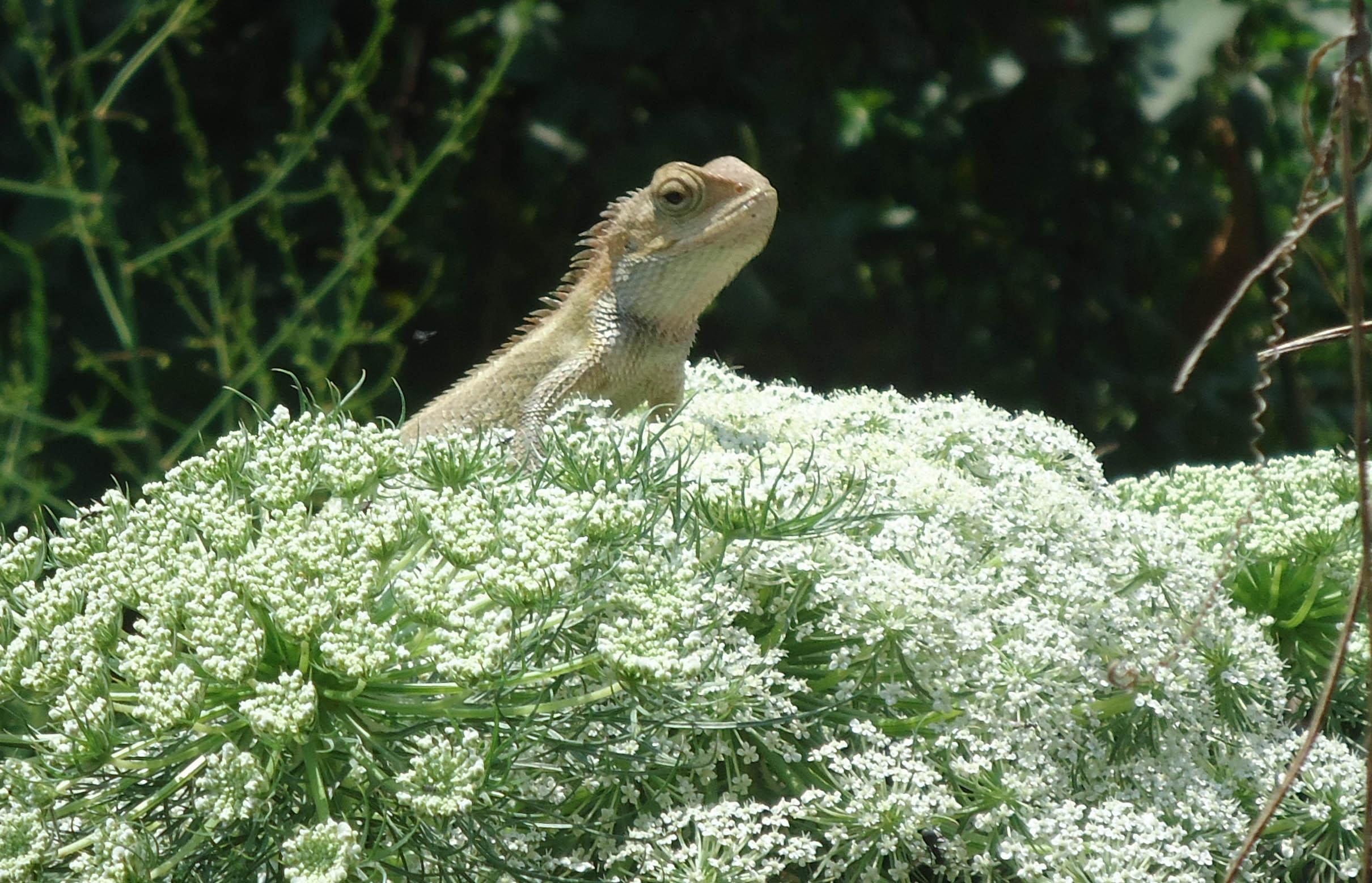 Biodiversity29.jpg