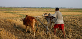 Engagement In Agriculture