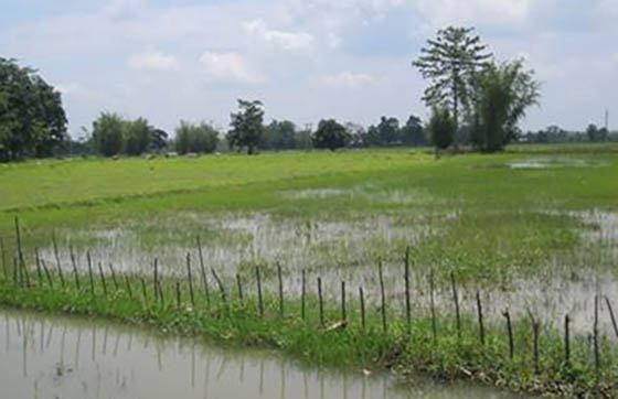 Flood affected agricultural land in lower Laopani