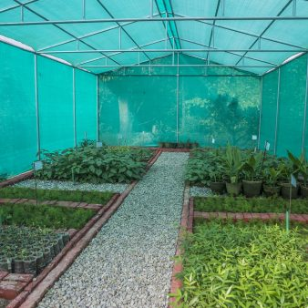Distribution of material – seed and seedlings