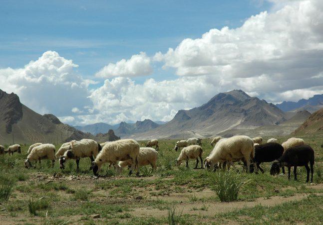 Tibet Rangelands