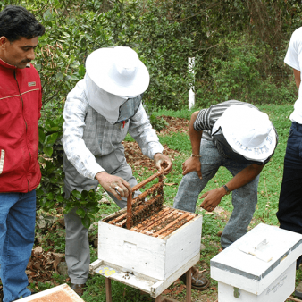 Beekeeping in the Chittagong Hill Tracts, Bangladesh: A success story