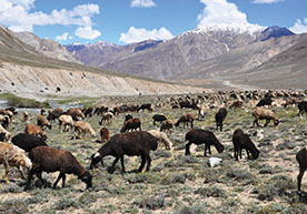 Wakhan National Park