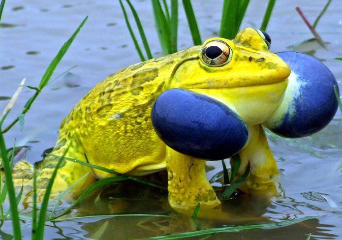 biodiversity-1