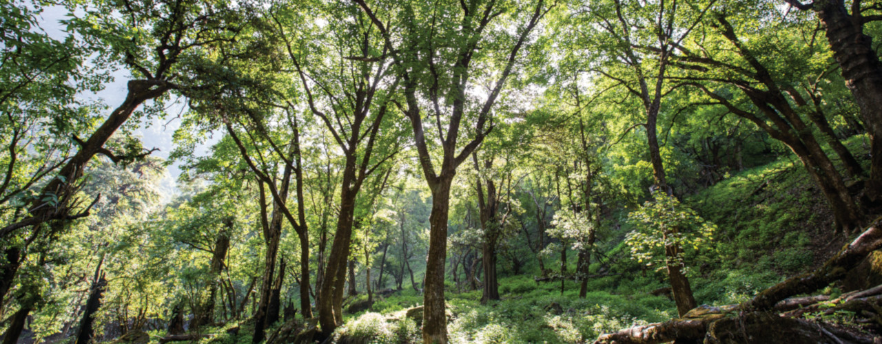 Incentives for Ecosystem Services