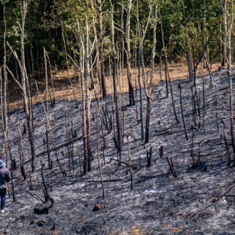 What ever happened to shifting cultivation?