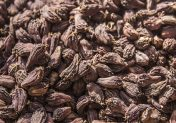 Harnessing the comparative advantages of large black cardamom