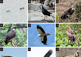 India bird checklist