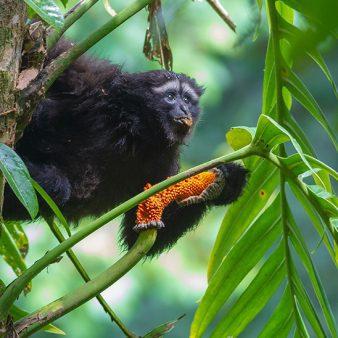 The status of primates