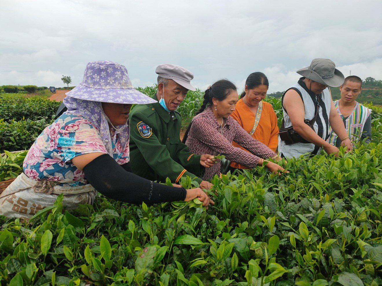 local tea farmers