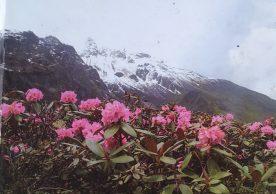 Sikkim flora